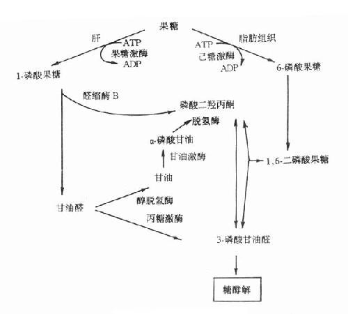 linchuangshengwuhuaxue010