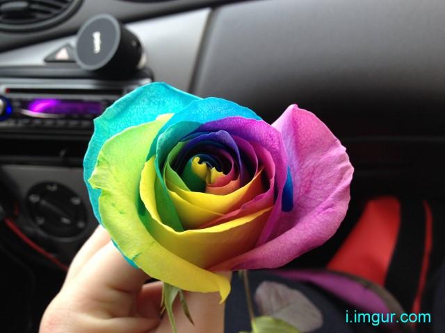 rainbowgrapes6