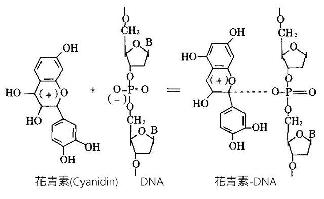 Anthocyanidins1